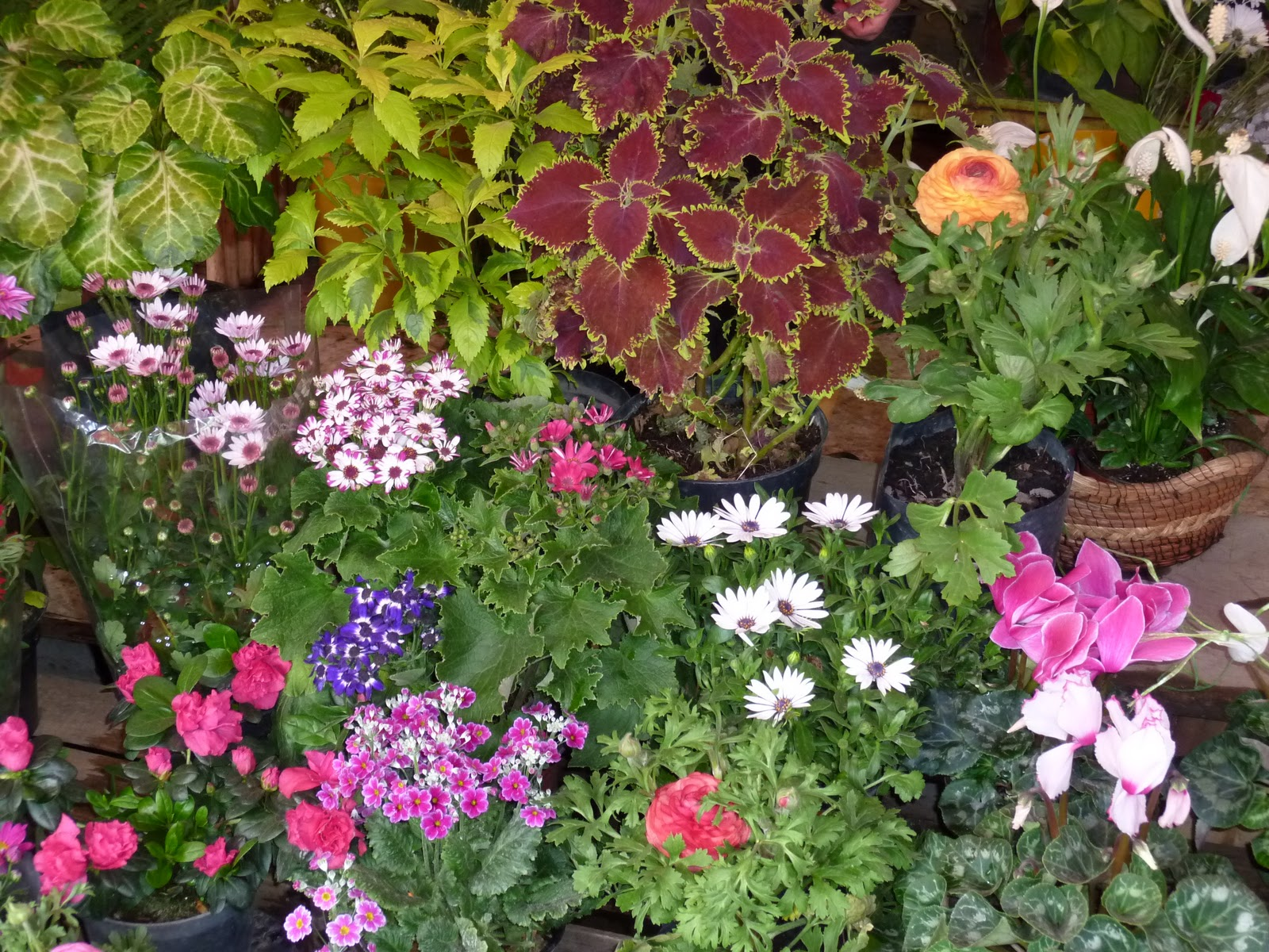Tipos de plantas que hay en mexico v rias - Tipos de plantas ...